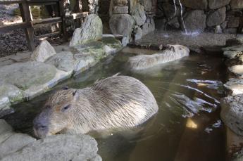 長崎野生動物園