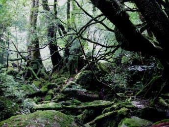 屋久島自然體驗
