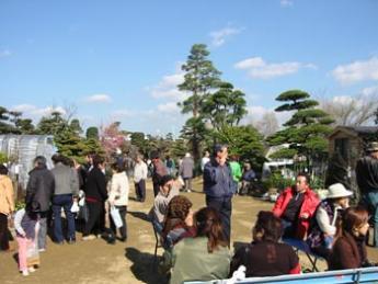 熊本春之植木市場