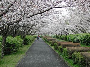 海中道海濱公園