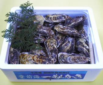 苅田町漁業協同組合「豐前海一粒牡蠣」