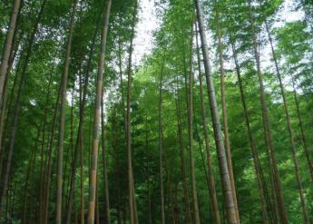 九州健行路線 久留米・高良山路線