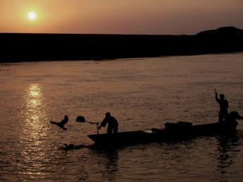原鶴 夏天的風景線 鸕鶿捕魚
